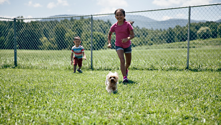 crossing-creek-lifestyle-fun-kids-dog-friendly