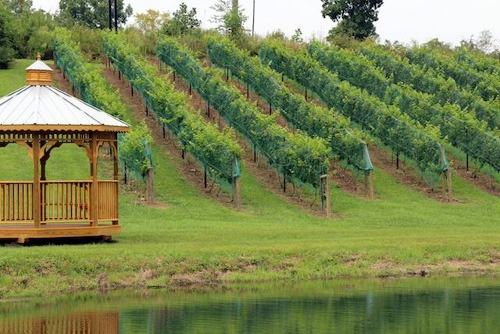 Odom Springs Winery