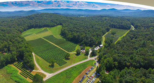 cartecay vineyard georgia