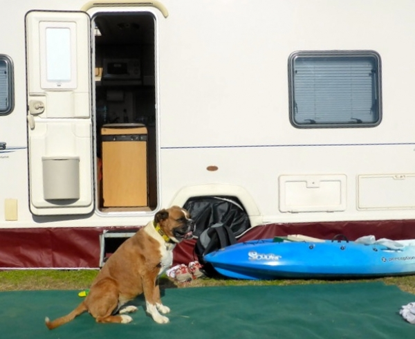 14 Things To Consider If You're Thinking of RVing with a Dog