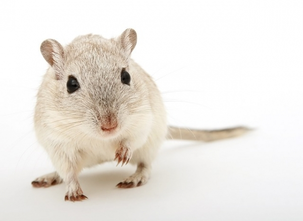 Rodent Problems in Your Motorhome?